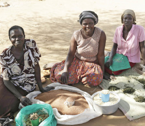 Small business loans help northern Ugandan women expand cash crop business.