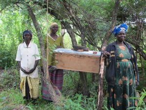 Generating income from honey - new style hive at apiary in Lamwo, northern Uganda